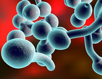 Gljivična infekcija Kandida (Candida albicans) – simptomi i lečenje prirodnim sredstvima