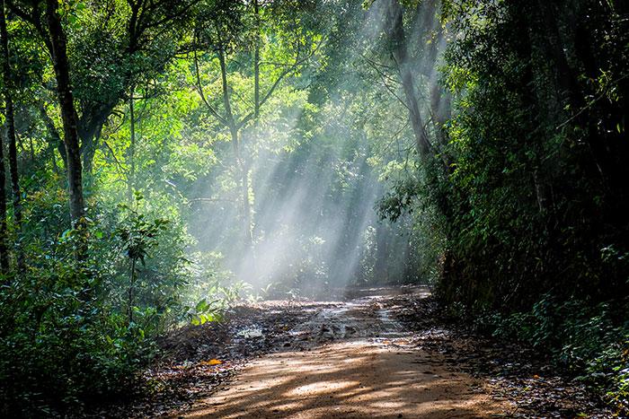 Kišne šume